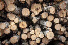 Birch firewood stacked in a large pile royalty free stock photography