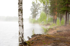 Birch by foggy lake Royalty Free Stock Photography