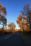 Birch forest in autumn Stock Photos