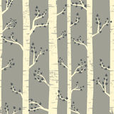 Birch Forest Background Royalty Free Stock Image
