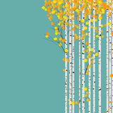 Birch forest card. Birch forest autumn background, decorative card with room for text Royalty Free Stock Image