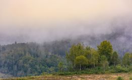 Birch forest on foggy morning. Beautiful nature scenery in autumn Stock Photos