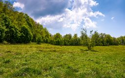 Birch forest on grassy slope. Lovely springtime nature background Stock Photo
