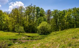 Birch forest on grassy slope. Lovely springtime nature background Stock Image