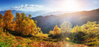 Birch forest in sunny afternoon while autumn season, Stock Photography