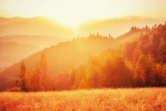 Birch forest in sunny afternoon while autumn season. Royalty Free Stock Photo