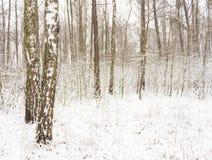Birch Forest In Winter Stock Photos