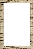 Birch frame. Birch pictures frame with white copy space Royalty Free Stock Image