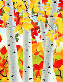 Birch grove. Illustration, AI file included royalty free illustration