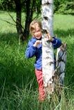 birch grove obrazy stock