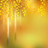 Birch grove. Autumn  background with birch grove Royalty Free Stock Photo