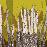 Birch grove in autumn. Hand drawn illustration. Ukraine Stock Photos