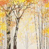 Birch grove in autumn time Royalty Free Stock Image
