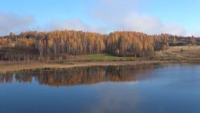 Birch grove on the bank of the Gorodishchenskoye lake, autumn in Izborsk, Russia. Birch grove on the bank of the Gorodishchenskoye lake. Golden autumn in Izborsk stock footage