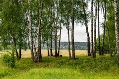 Birch grove on the border of fields, cloudy summer day in nature. Archaeological monument - the village of Luzhki. Obninsk, Kaluzhskiy region royalty free stock photography