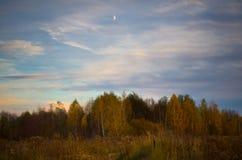 Birch Grove, evening. Stock Photography