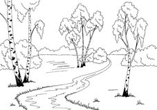 Birch grove graphic black white sketch landscape illustration Stock Photography