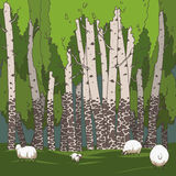 Birch grove and sheeps Stock Image