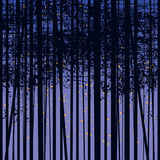 Birch grove vector background against the dark sky Royalty Free Stock Images