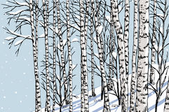 Birch grove in the winter. Vector image the birchwood in a winter snowy day vector illustration