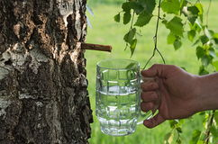 Birch juice Stock Image
