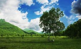 Birch on Kamchatka Stock Photography
