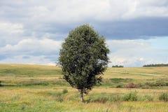birch krajobrazu Fotografia Royalty Free