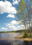 Birch  lake Royalty Free Stock Photos