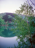 Birch on the lake. Royalty Free Stock Image
