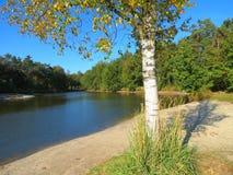 Birch and lake Stock Image