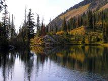 Birch Lake Reflection Royalty Free Stock Images