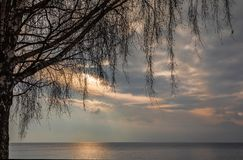 Birch. Lake. Sunrise. Leman. Trees. Stone. Sky. Beautiful winter sunrise on the lake Leman, near the Lausanne city. Winter and snow time royalty free stock images