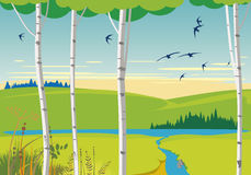 Birch landscape and swallows Royalty Free Stock Photography