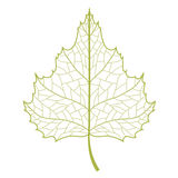 Birch leaf. Stock Photography