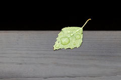 Birch leaf. On the edge of a wooden pier after summer rain Royalty Free Stock Photos