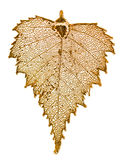 Birch leaf in gold Royalty Free Stock Images