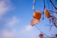 Birch leaf in the ice on the sky background. A yellow birch leaf in the ice on blue sky background Royalty Free Stock Images