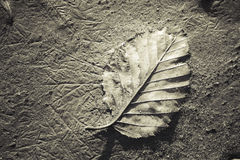 Birch Leaf on Sand Royalty Free Stock Image