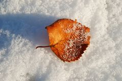 Birch leaf on a snow. Stock Photo