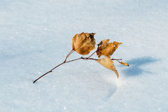 Birch leaf on snow Stock Image