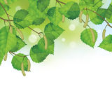 Birch leaves background Royalty Free Stock Image