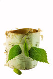 Birch leaves with birch bark on white background Stock Photography