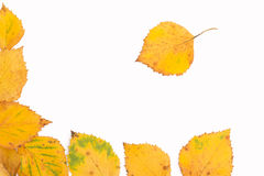 Birch leaves frame Stock Images