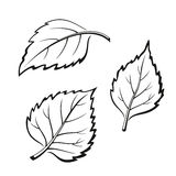Birch Leaves, Pictogram Set. Set of Plant Pictograms, Birch Tree Leaves, Black on White. Vector Stock Photography