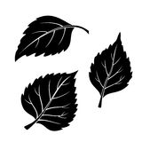 Birch Leaves, Pictogram Set. Set of Plant Pictograms, Birch Tree Leaves, Black on White. Vector Stock Photo