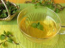 Birch leaves tea Stock Image