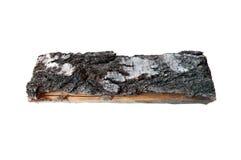 Birch log Royalty Free Stock Photography