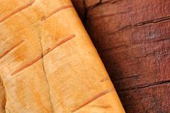 Birch Log and Bark Royalty Free Stock Photography