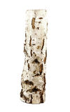 Birch log Stock Images