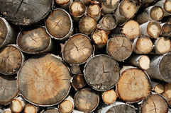 Birch logs Stock Photo